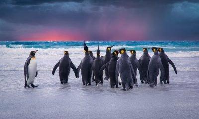 Un pensiero per Linux